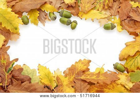 Autumn Oak Leaves And Acorns Border
