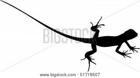 Baby Iguana 2_.eps