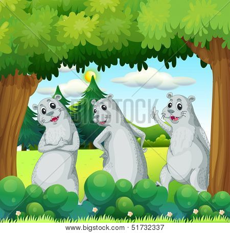 Illustration of the three sealions in the forest