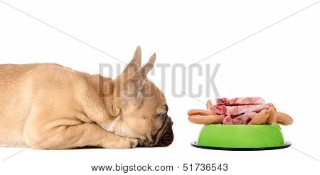 Dog With A Feeding Bowl Full Of Meat And Sausage