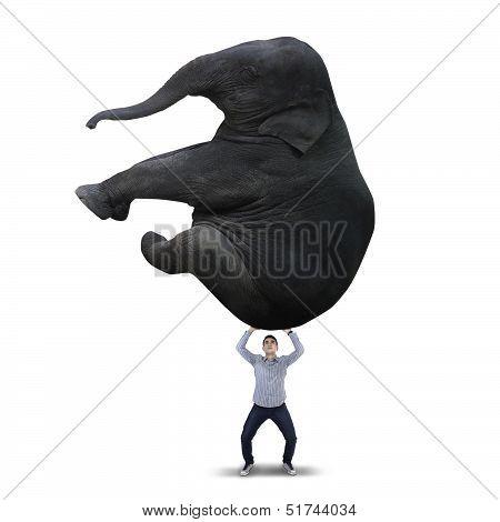 Man Lifting Big Elephant - Isolated