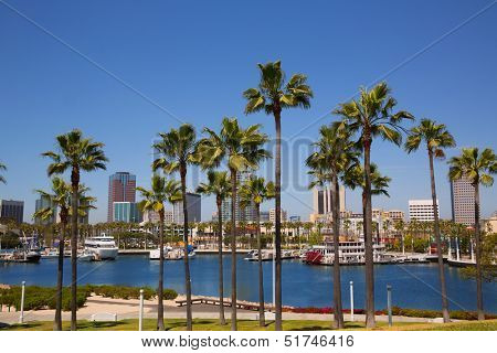 Long Beach California skyline with palm trees from marina port USA
