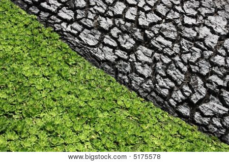 Dry Mud And Floating Plant