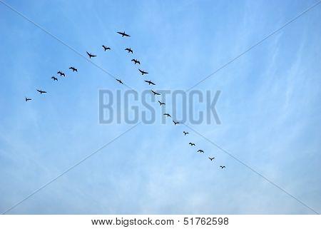 Birds Flying In Sauraha, Nepal