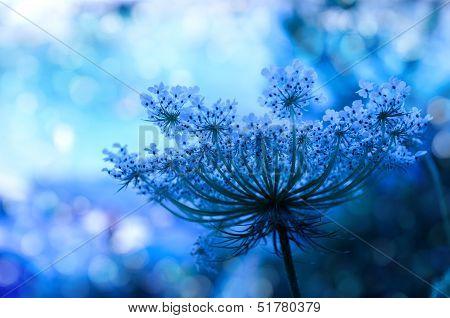 Wildflower background
