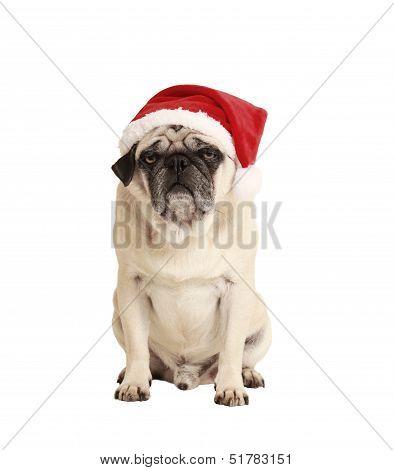 Dog As A Christmas Gift