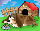 foto of sad dog  - Sad dog in front of kennel 2  - JPG