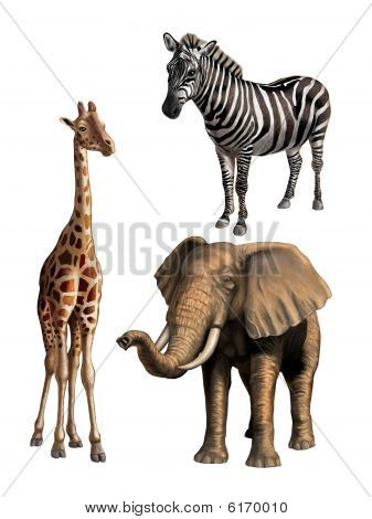 Wildlife I