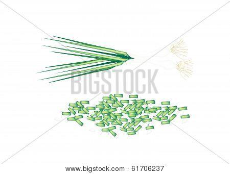 Fresh Green Spring Onion On White Background
