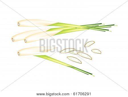 Stack Of Fresh Lemon Grass On White Background