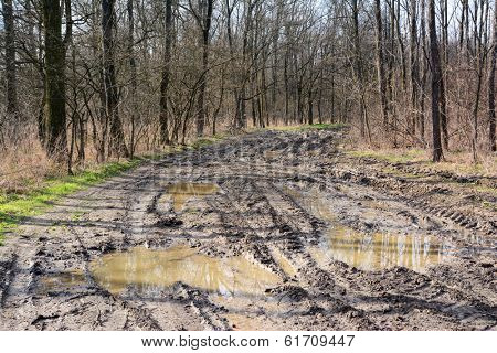 Muddy offroad track in the forest