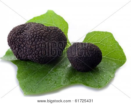 black truffle over leaf on white background