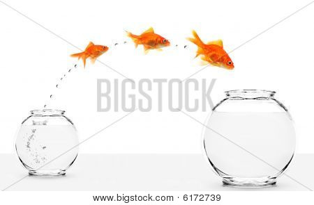 Three Goldfishes Jumping From Small To Bigger Bowl