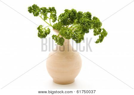 Green parsley with stone vase
