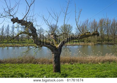 Fruit trees on a dike along a sunny river