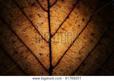 Macro of dried leaf grunge as background