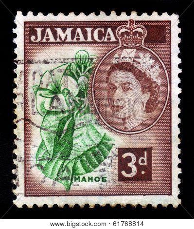 Mahoe, National Tree Of Jamaica