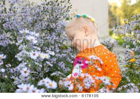 Pretty Little Girl Play In Aster Flowers In The Park.