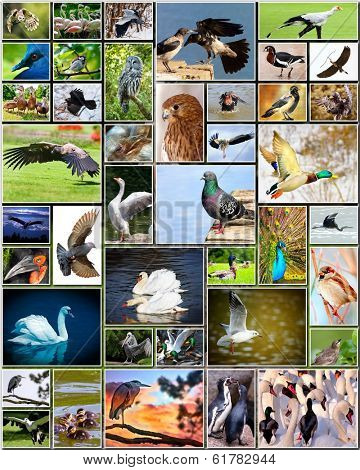 Collage of various species of birds