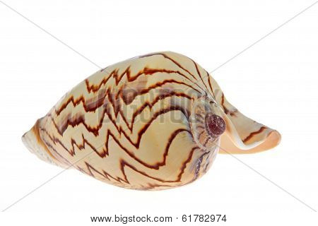 Shells With Texture