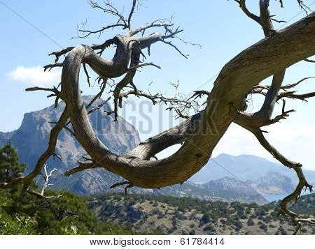 Bare tree branch.