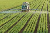 stock photo of pesticide  - Farming tractor spraying a green basil field - JPG