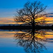 stock photo of shoreline  - leafless tree on sunset background with water reflection - JPG
