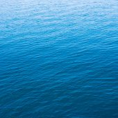 picture of indigo  - sea indigo blue for natural background texture - JPG