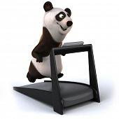 picture of panda  - Panda - JPG