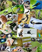 Collage of various species of birds