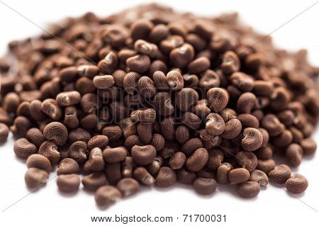 Abelmoschus moschatus (ambrette) seed