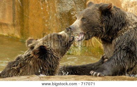 Bären Kuss