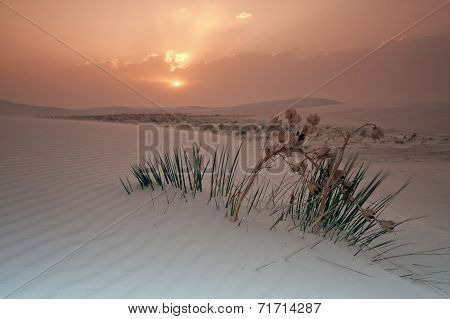 Sunrise In White Dunes National Monument