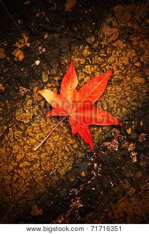 Red autumn leaf fall on asphalt background
