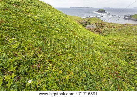 green vegetation at Cape Onion, Newfoundland