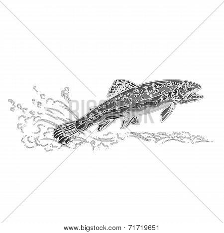 Brown Trout Engraving Vintage Vector