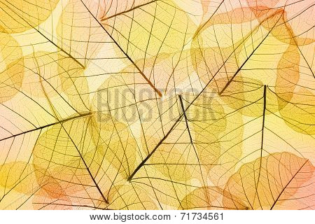 Colors of Autumn - Abstract transparent  Leaves Background