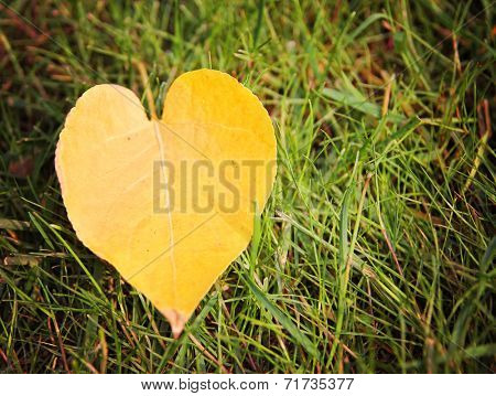 an image of single fallen leaf on ground in a ray of sunshine on the earth