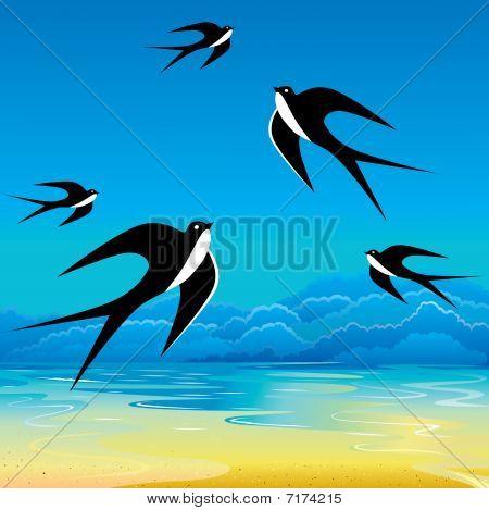 Swallows.