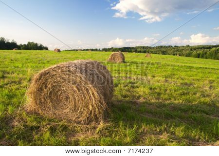 fardos de feno em um campo no tempo do sol