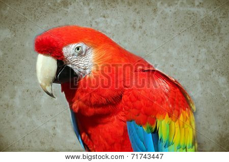 Parrot - Red Macaw On Background Of The Old Aged Paper