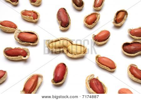 Couple Of Peanuts
