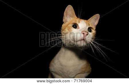 Street Cat On The Roof Over Black Night Background