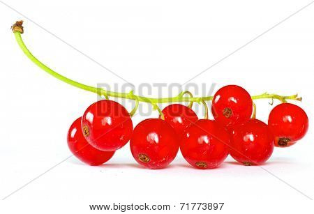 red currant isolated on a white background