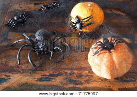 Halloween Pumpkins, Spider, Spider Web