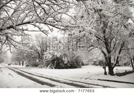 Snow Strom In Suburbs