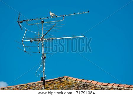 Aerial with Dove on Rooftop