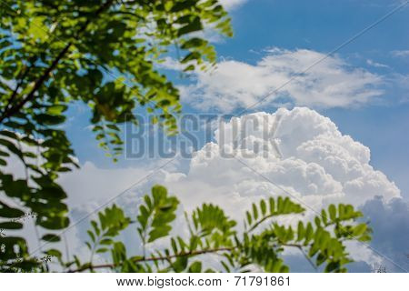 Heavy Thunderclouds over Forest