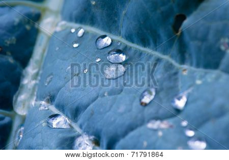Freshly Fallen Raindrops on Leaf