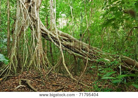 Jungle in Nam Cat Tien National Park (Southern Vietnam). Evergreen Tropical Forest